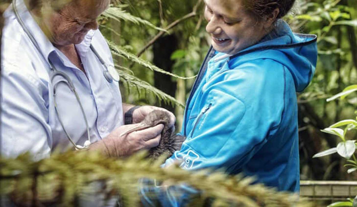 Hatching a plan to save kiwi